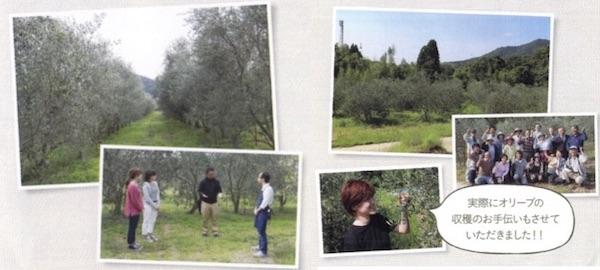 オリーブ農園の写真